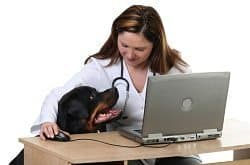 Dog Veterinarian with a Rottweiler