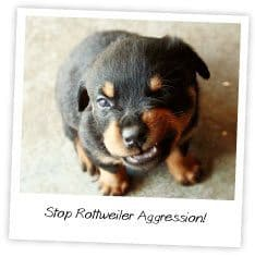 Stop Rottweiler Aggression
