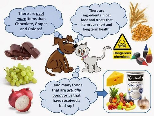 Can A Dog Eating Cat Food Cause Seizures