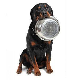 Rottweiler Food