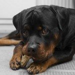 Destructive Chewing & How to Fix It